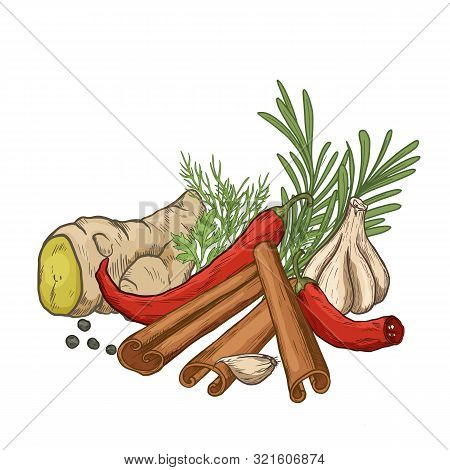 Sketch Herbs And Spices Color Set. Vector Illustration