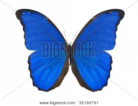 macro photo of butterfly isolated on white background