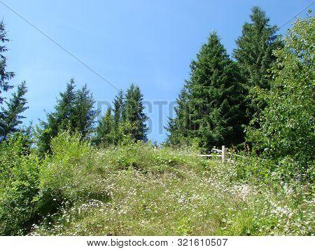 Beautiful Sunny Day Is In Mountain Landscape. Carpathian, Ukraine.