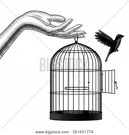 Female hand releases a bird from a cage. Vintage engraving stylized drawing
