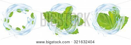 Set, Collection Of Green Mint Leaves. Mint Leaves In A Spray Of Beautiful Blue Water. Water Splashes