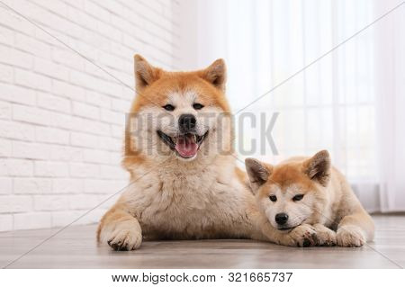 Adorable Akita Inu Dog And Puppy On Floor Indoors