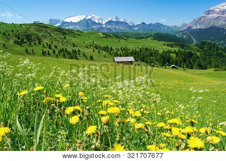 Beautiful Mountain Scenery With Blooming Pastures And Marmolada Peak On The Horizon -  Dolomites Ita