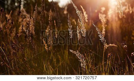 Light Backdrop. Beautiful Autumn Nature. Autumn Garden. Grass Background. Green Farm. Summer Color.