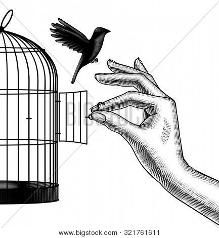 Female hand lets a bird go from a cage. Vintage engraving stylized drawing