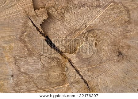 Background of truncated wood trunk section texture. poster