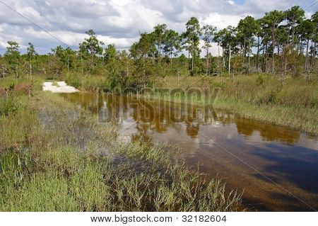 Flooded Buggy Trail