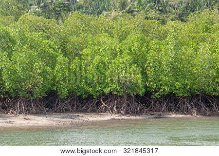 Mangrove forest by the coast line. Water and mangroves roots. Nature, tourism destination, tourist attraction.