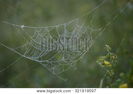 Spider Web With A Spider In The Middle In Drops Of Dew On A Green Background