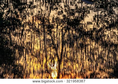 Abstract reflections of sunset at the water surface with dark mangrove tree spikes