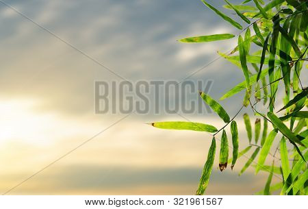 Bamboo Leaves, Green Leaf On Blurred Greenery Background. Beautiful Leaf Texture In Nature. Natural
