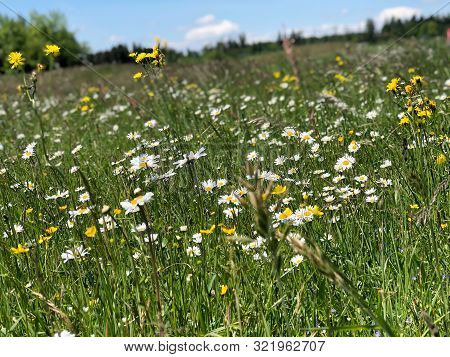 Summer Floral In The Meadow With  Green Grass
