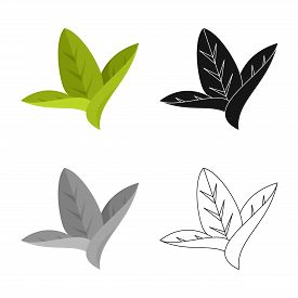 Isolated Object Of Leaf And Leaves Icon. Collection Of Leaf And Botanical Stock Symbol For Web.