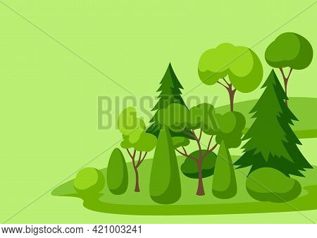 Background With Trees, Spruces And Bushes. Summer Or Spring Landscape.