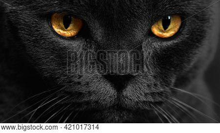 Yellow Cat Eyes On A Dark Background. Cat Look. Face With Yellow Eyes.