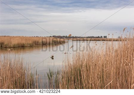 Low Angle View Of A Swampy Lake With Reeds And Blue Sky. Kinburnsky Cape Or Kinburnskaya Spit Is A S