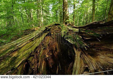Jungle And Nature Reserve Rothwald, Austria