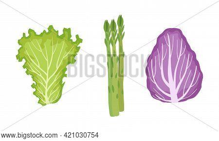 Salad Green Leaves And Leafy Vegetables Set, Lettuce, Radicchio, Asparagus, Organic Vegan Healthy Fo