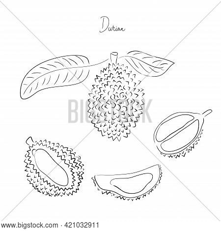 Hand Drawn Vector Illustration Set. Exotic Sketch Fruit. Tropical Durian