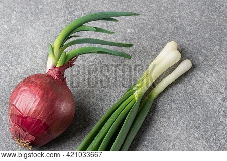 One Red Onion With Green Sprouts And Green Onions On A Gray Table. Household Onion Harvest