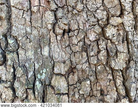 Deep And Detailed Tree Trunk Bark Closeup View With Shadows And Weathered Texture Shot As Nature Bac