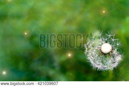 Summer Ending Banner. Single Dandelion Close Up. Defocused Lights Background. Beautiful Meadow Field
