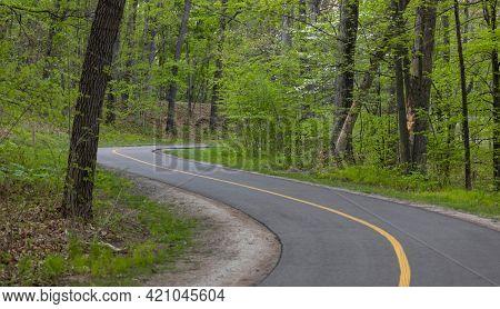 Lush green trees by the biking trail
