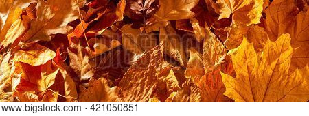 Autumn Fall Thematic Background With Dry Leaves.