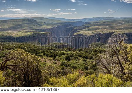 Green Trees Line The Dropoff Into Black Canyon Of The Gunnison