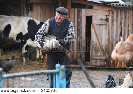 Belarus. Village Lavrishcheva - 19.01.2011: A Man Is Engaged With The Animals In The Yard In The Vil