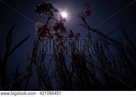 Flowers In Low Light, Photo Art, Backlit, Sun, Nature Background Illustration