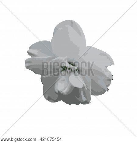 Daffodil White Flower Art Design Stock Vector Illustration Art Object Isolated For Web, For Print