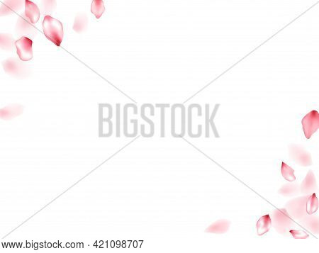 Pink Peach Flower Flying Petals Isolated On White. Beautiful Floral Background. Japanese Sakura Peta
