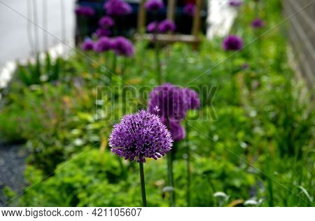 A Bed Of Colorful Prairie Flowers In An Urban Environment Attractive To Insects And Butterflies, Mul