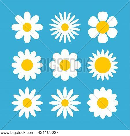 Daisy Chamomile Vector Flower Shape Illustration Icon. Camomile Flower Cartoon Design