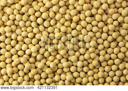 Soybeans shot from above. Premium grade soybeans.