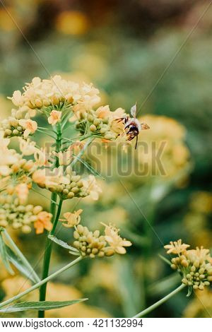 Bee pollinating a yellow plant in the wild
