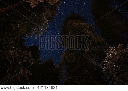 Night view of treetops at Yosemite National Park, United States
