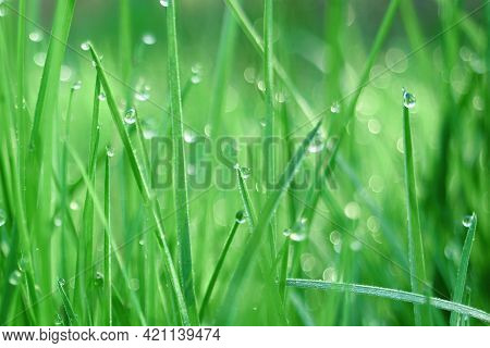 Green Grass With Water Drops Close In The Sunlight. Natural Background