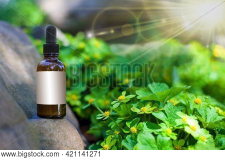 Natural Remedies Aromatherapy - Bottle And Empty Label. Mockup