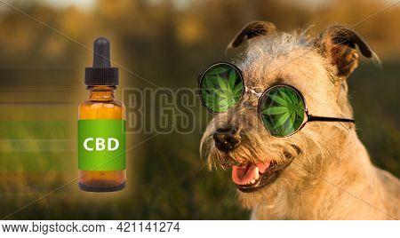 Medical Marijuana Cannabis Cbd Oil Dog Food. Funny Concept.