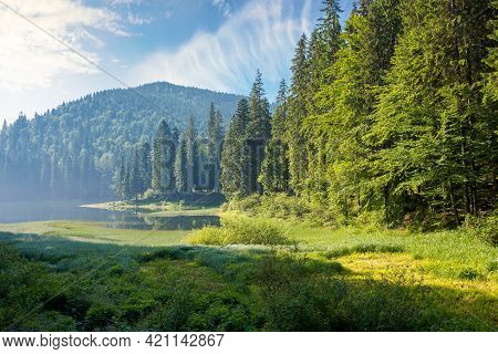 Mountain Lake Among The Forest In Morning Light. Wonderful Summer Nature Scenery With Coniferous Tre