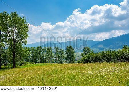 Trees On The Grassy Alpine Pasture In Summer. Borzhava Mountain Ridge In The Distance. View From Vol