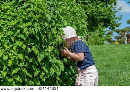 Child And Curiosity. Curious Child Peering Into The Bushes On A Sunny Day In The Park
