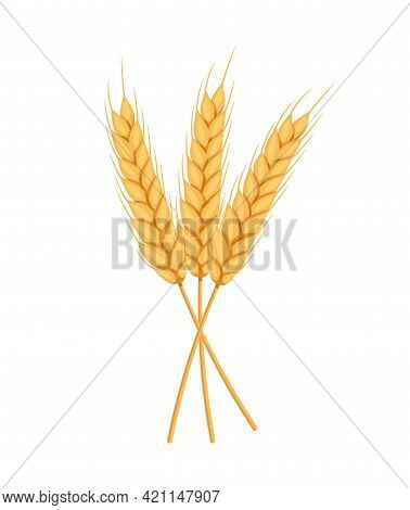 Ears, Spikelets Of Wheat With Grains. Yellow Flakes For Bakers, Flour Production Design. Whole Stalk