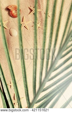Seashell And Starfish Pattern On The Sandy Beach And Palm Branch. Summer Background.