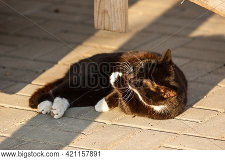 The Black And White Cat Lying On The Street And Licks A Paw.
