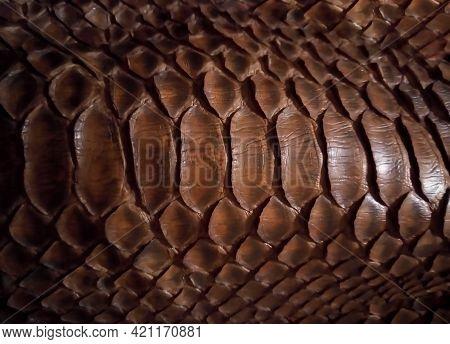 Close Up Of Black Snake Texture. Dark Reptile Skin Background.