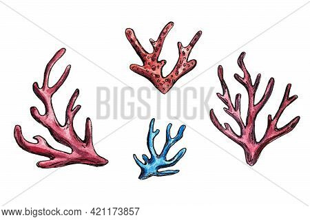 Hand Drawn Watercolor Illustration Of Defferent Corals