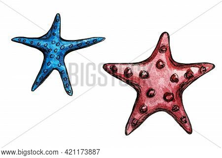 Hand Drawn Watercolor Illustration Of Two Starfish